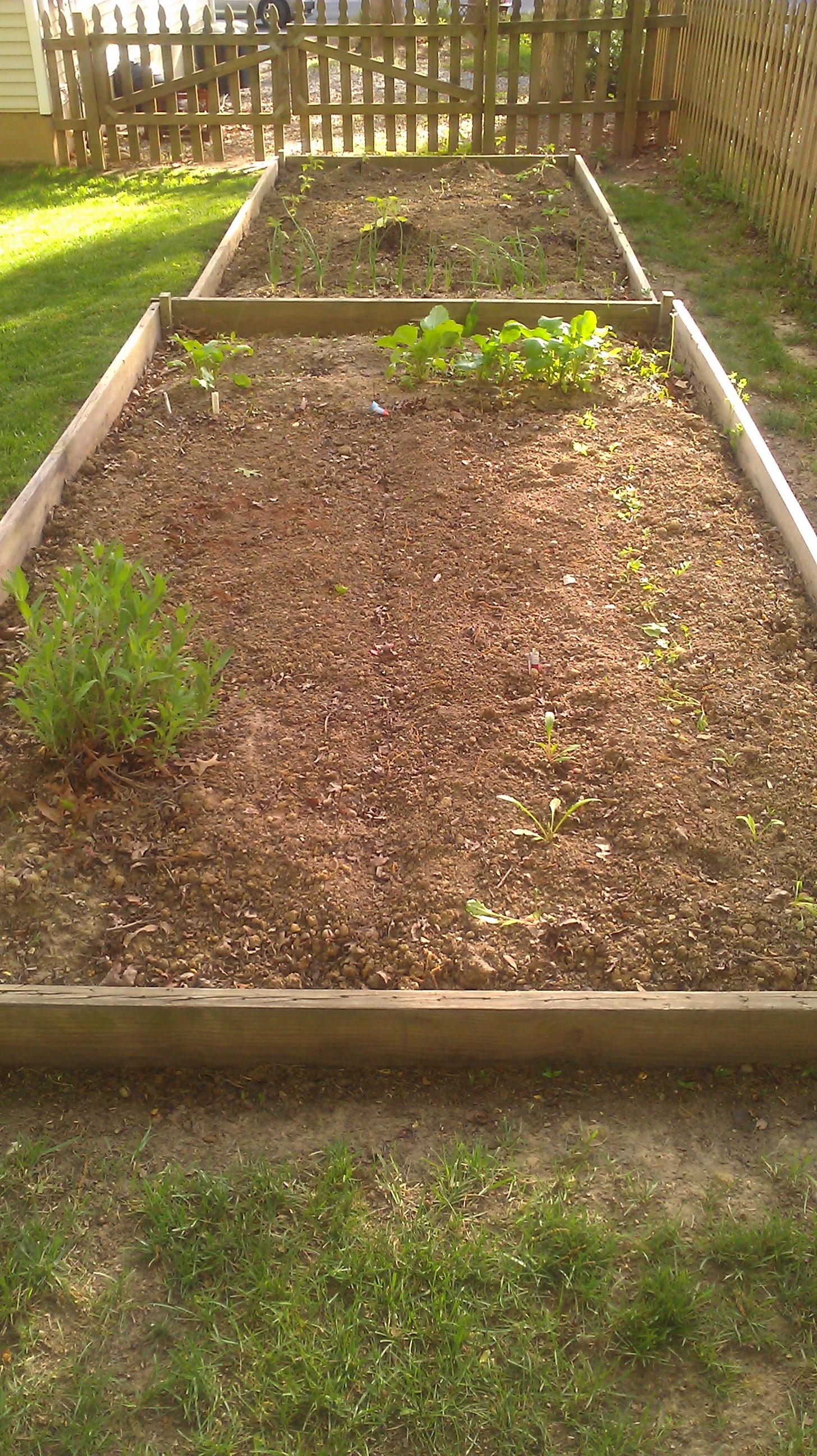 Backyard Garden | Pick Well